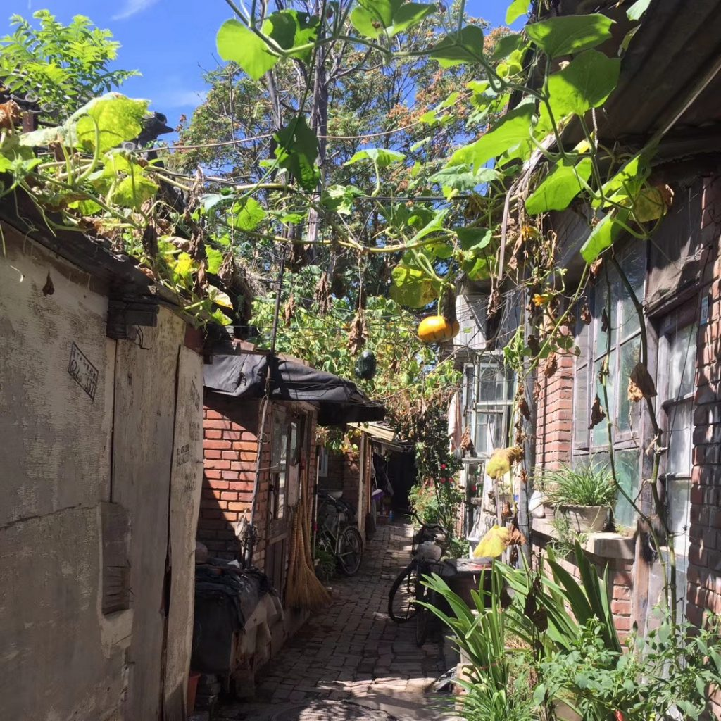 traditional beijing hutong alleyway with pumpkin vines grown accross both sides of the alley 1024x1024