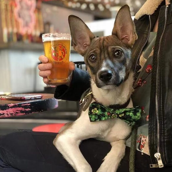 adopted dog with owner in a hipster beijing bar enjoying a local craft beer